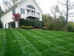 residential mowed lawn
