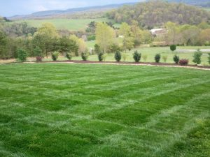 Lawn After Being Mowed