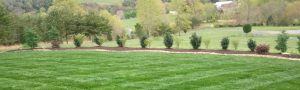 lawn, mowing, care services